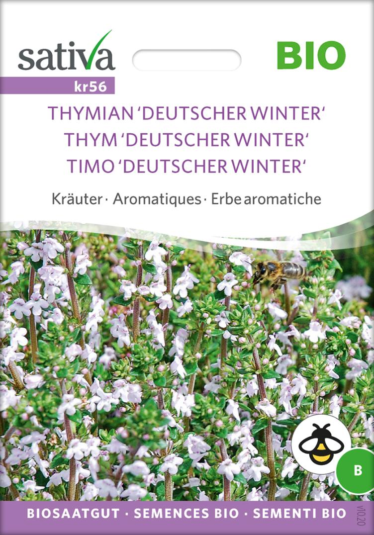 Thymian `Deutscher Winter`